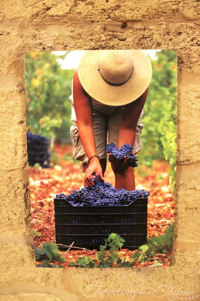 Batroun Mountains Winery Organic Vintage Vineyard