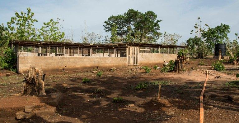 Ghana-Farms-0605