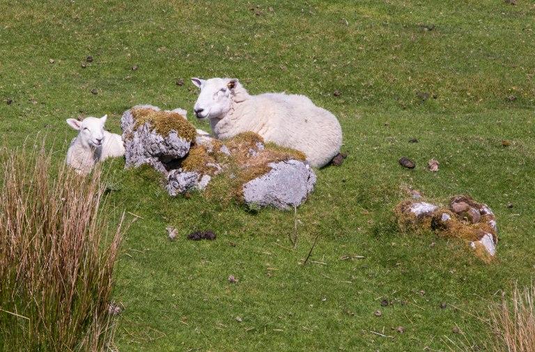 Scotland-Lochcarron-2623