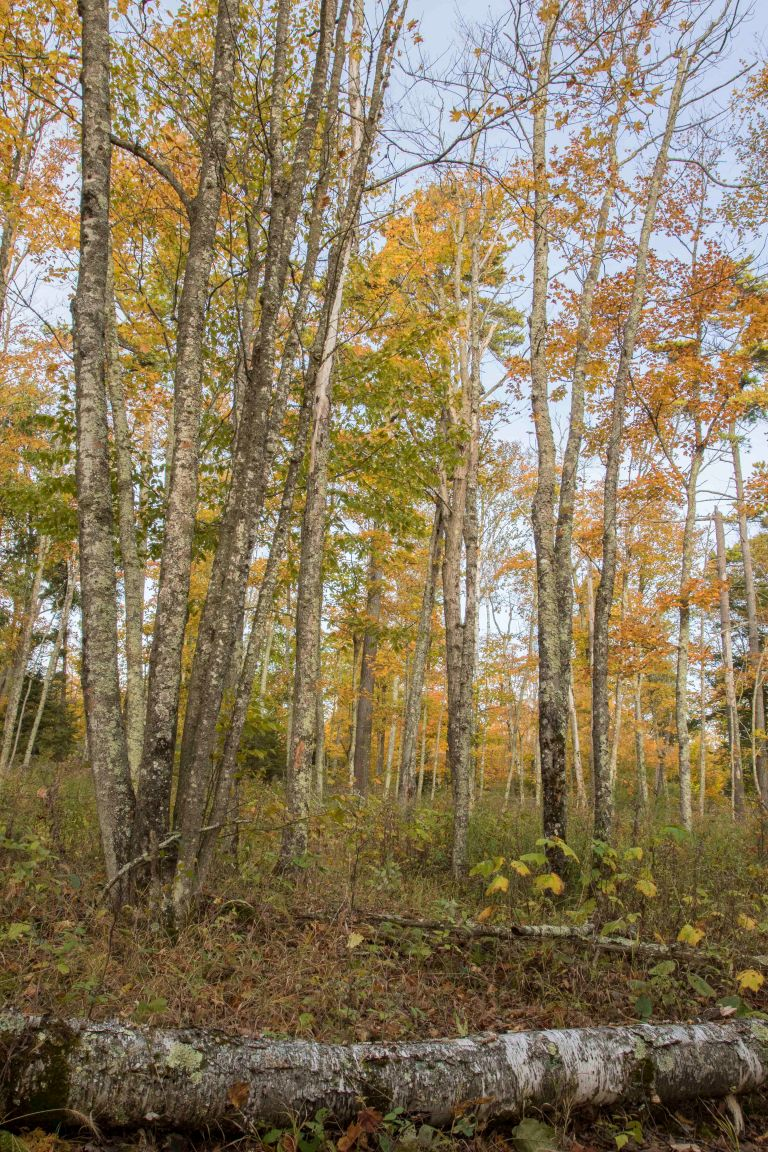 Whitefish Dunes SP-10-17-17-4593