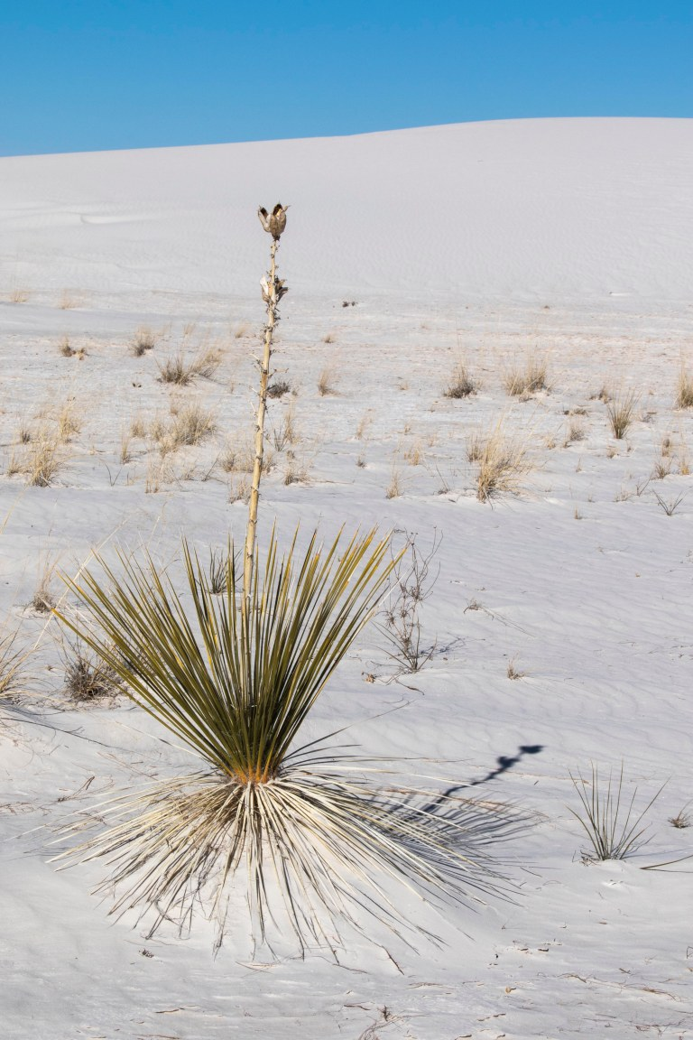 White Sands NM-2445