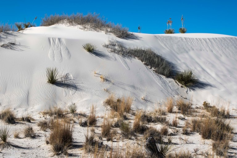 White Sands NM-5974