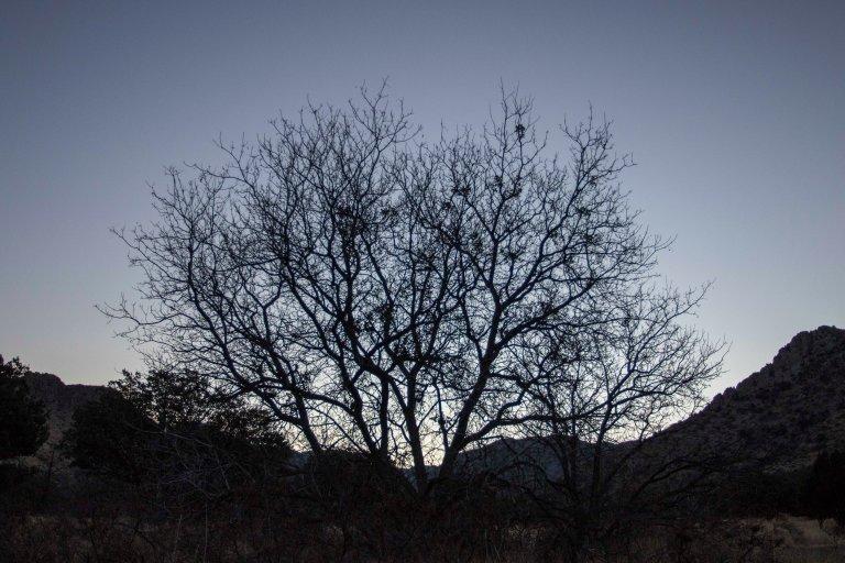 Chiricahua NM-6208