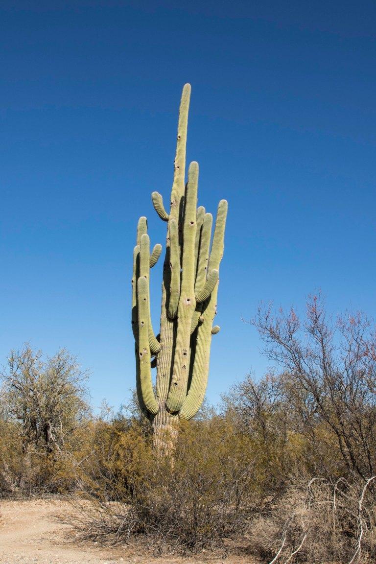 Saguaro NP-6357