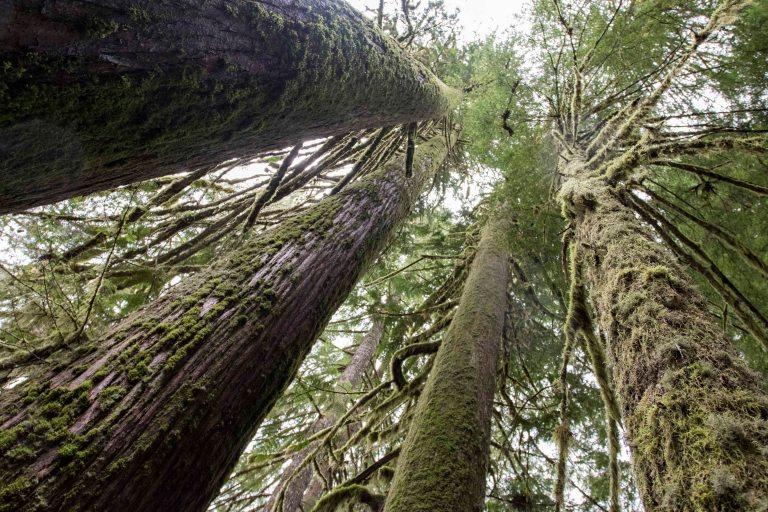 trees-2812