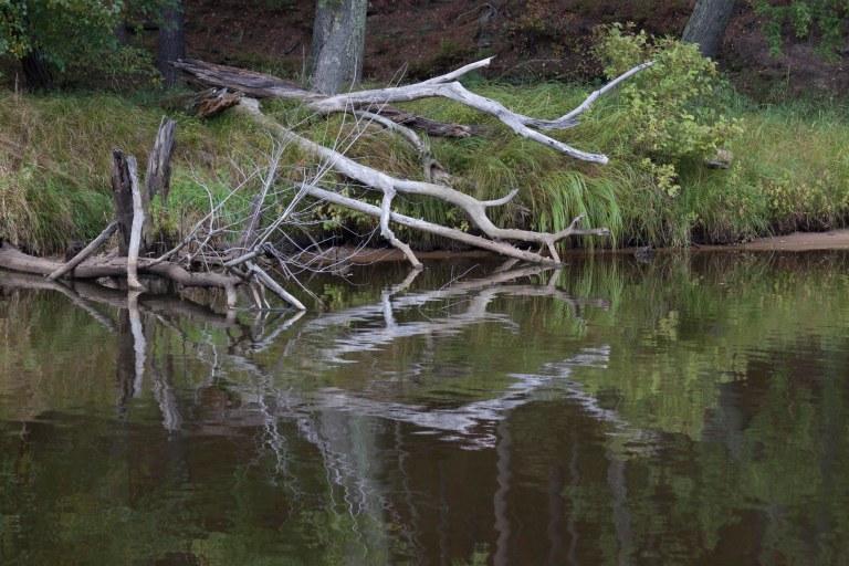 trees-3233