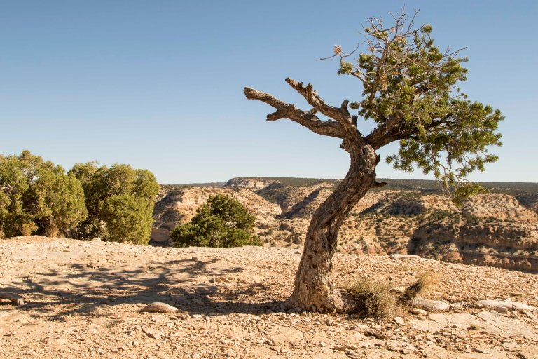 trees-3953