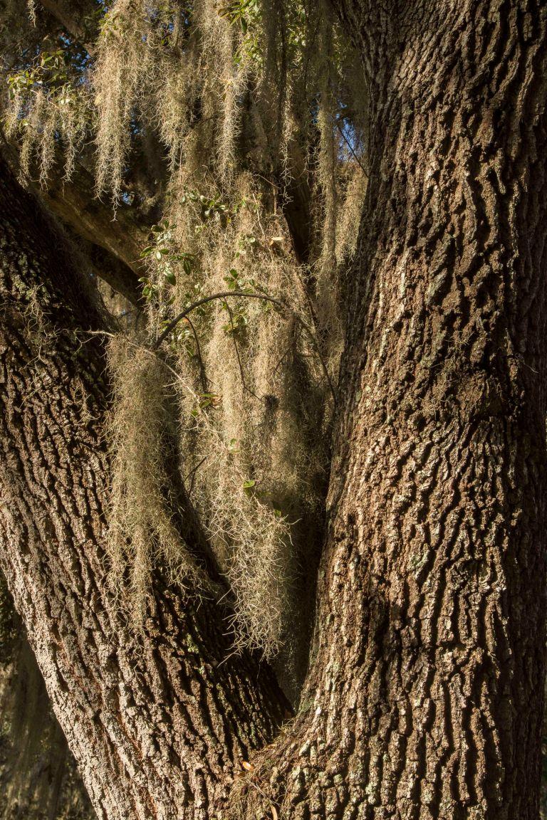 trees-5383