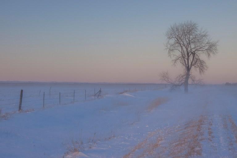 trees-7981
