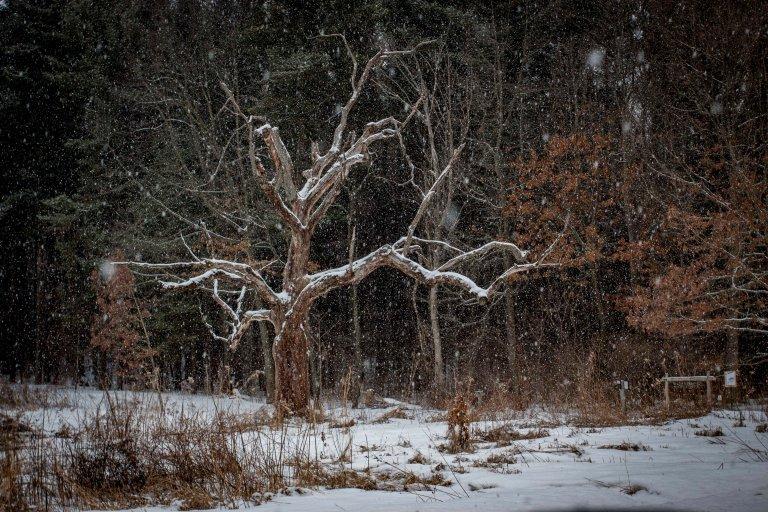 trees-8100