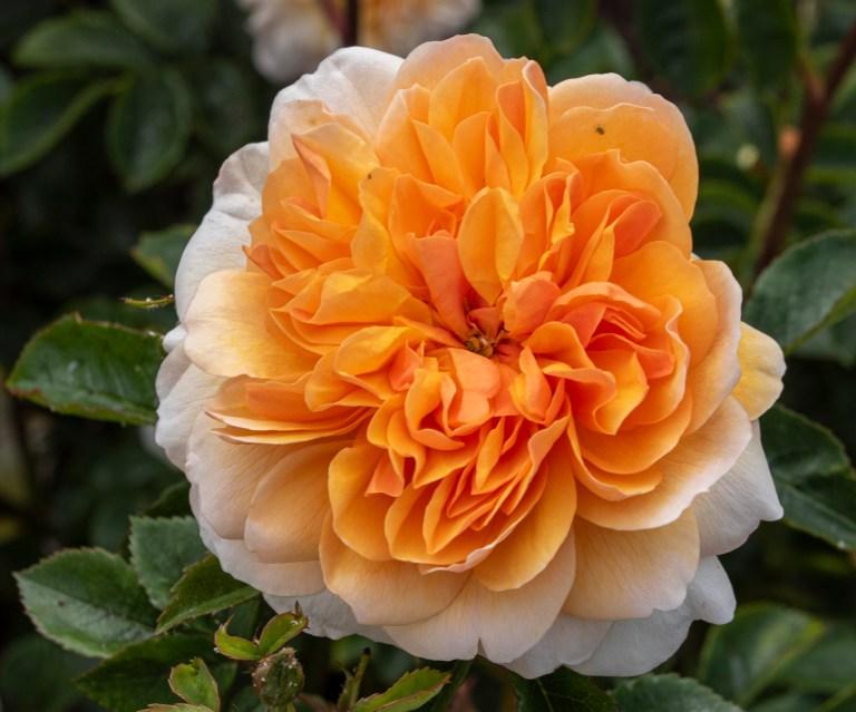 Kew Gardens-9554