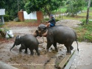 Elephant mother and her baby at Baan Chang Elephant Park (Chiang Mai, Thailand)