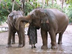 Elephants at Baan Chang Elephant Park near Chiang Mai (Thailand)
