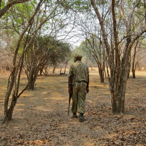 walking safari scout