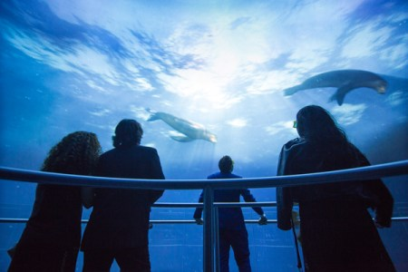 See the National Geographic Encounter: Ocean Odyssey,