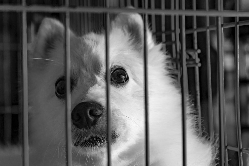 Dog in a Kennel - Help Soothe Your Pets While Flying - TravelLatte