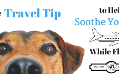 Travel Tips: Help Soothe Your Pet While Flying - TravelLatte