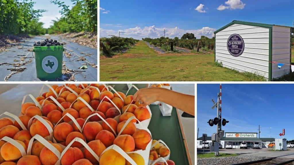 Collage of photos from Ham Orchards