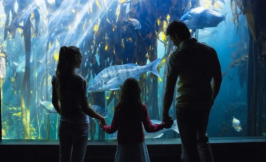 View of a family enjoying the view in Birch Aquarium
