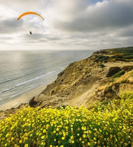 View of a paraglider and yellow flowers in Torrey Pines Gliderport