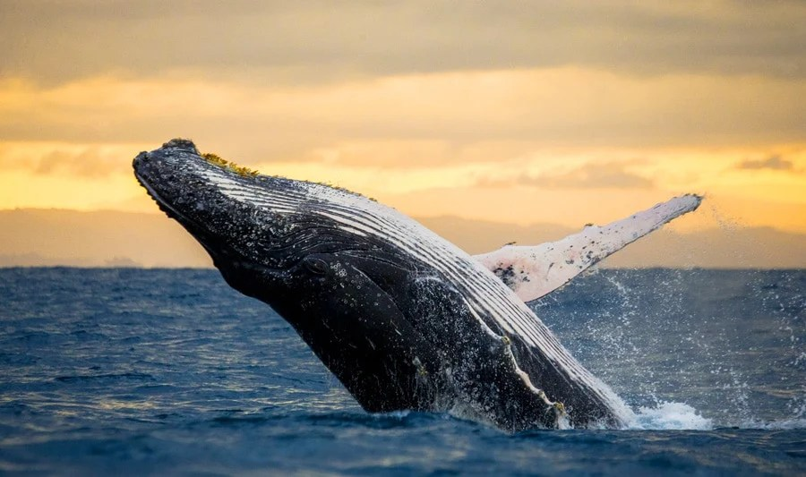 View of a whale jumping out of the water