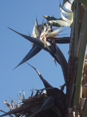 dramatic silhouette of a bird of paradise plant