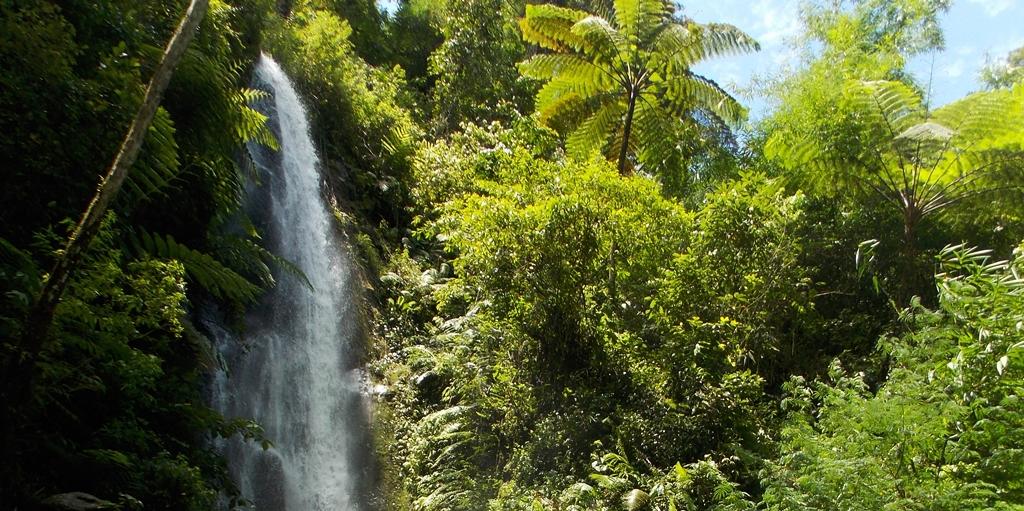 Menelusuri Hutan Pamongan, Menyambangi Air Terjun Parijotho Kediri 1