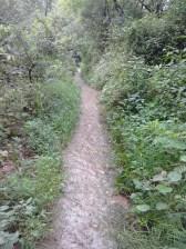 Jansooh -Village Travel Pathway Pics9