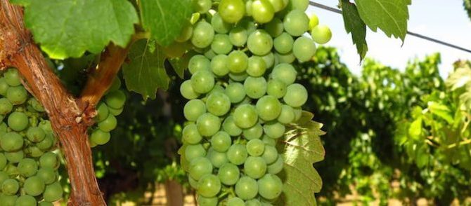 May is Aussie Wine Month – celebrate in Margaret River