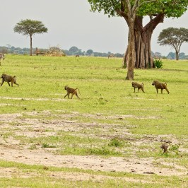 Tarangire Nationalpark