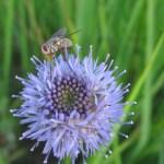 Если присмотреться - то насекомые вовсе не страшные, а очень даже симпатичные!