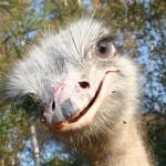 Самые смешные и потешные птицы