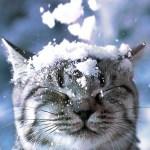 зимний кот позитив