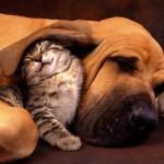 позитивные кот и собака