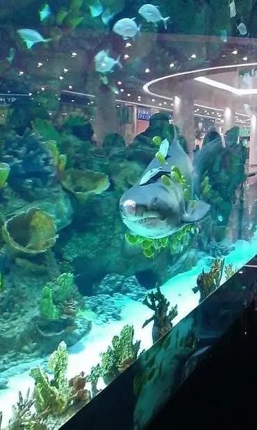 акула из Океан Плаза жива