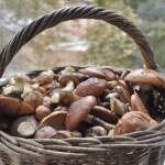 Какие грибы можно собирать, а какие нет. FAQ по грибам, часть 1