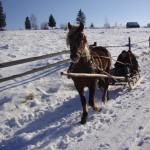 Отдых в Карпатах на Новый год