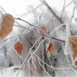 Зимние красивости Киева