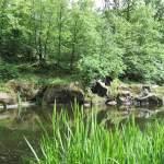 Скалодром в с. Дениши, дамба на реке Тетерев и замок Терещенко. Достопримечательности Житомирской области