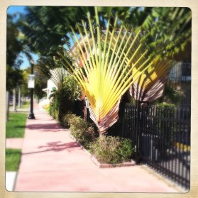 This fan art deco style palm looks great in the midday sun