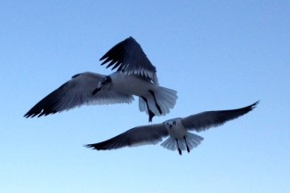 Capturing the Seagulls wing movement