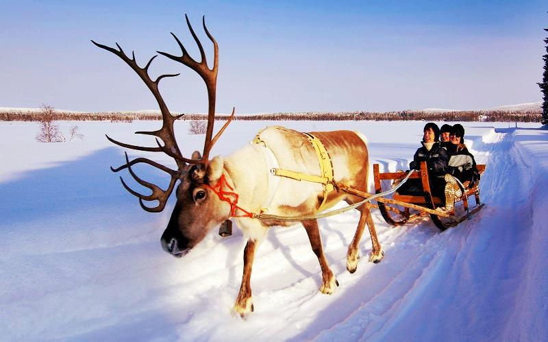 reindeer-ride-lapland