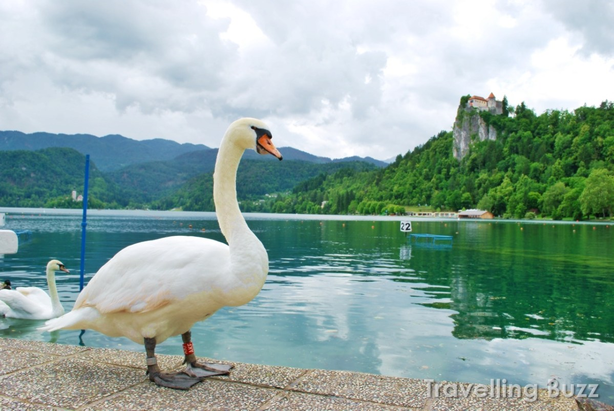 lake-bled-slovenia-blog