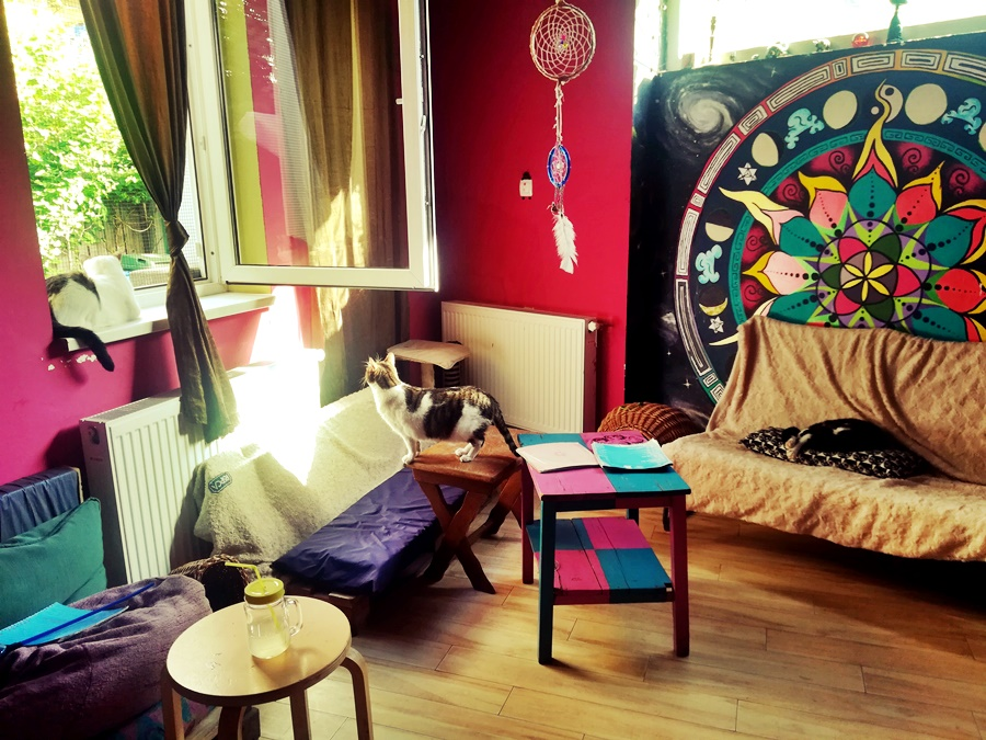 cat cafe bucharest things to do