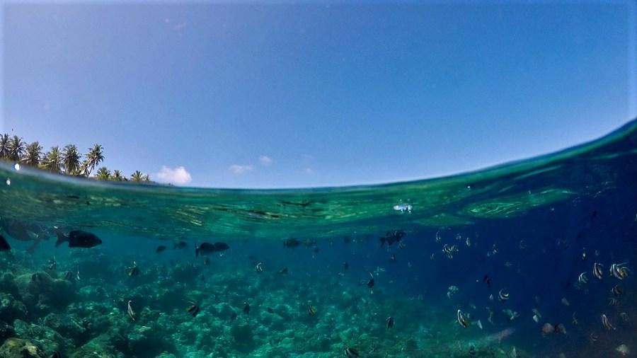 Snorkeling Maldives South Asia ASIA