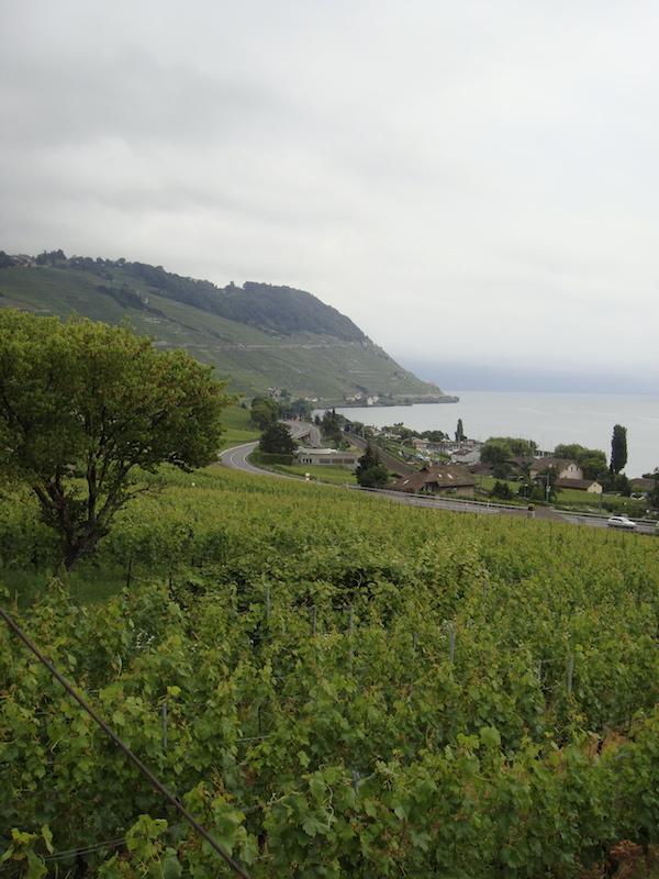 Lavaux wine region Switzerland