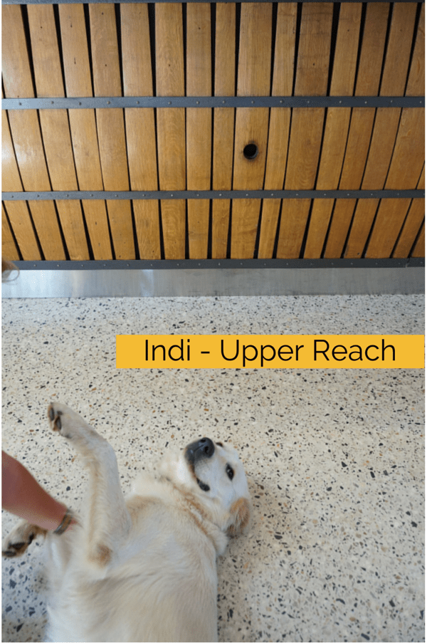 Indi - Upper Reach Winery - Swan Valley