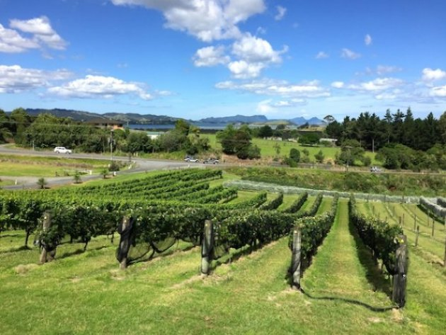 Longview Estate Vineyard Whangarei