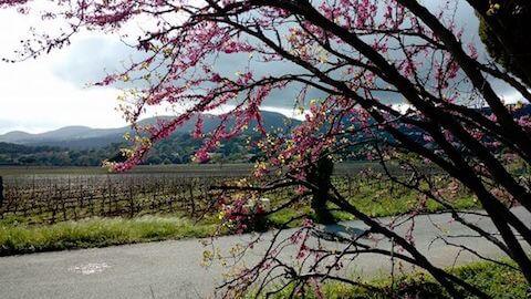 Domaine de la Croix in Spring - South of France Wine