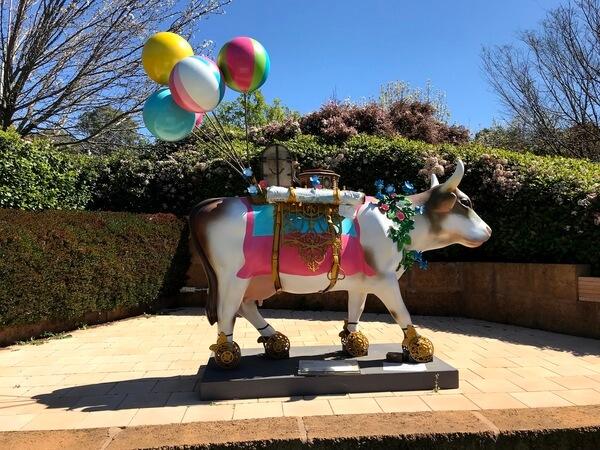 cow-at-mayattsfield-vineyard-perth-hills-bickley-valley